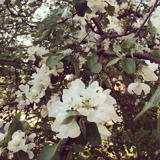 Ensi kerralla kun tekee mieli valittaa (turhasta), menen haistelemaan kukkia tai halaamaan puita.