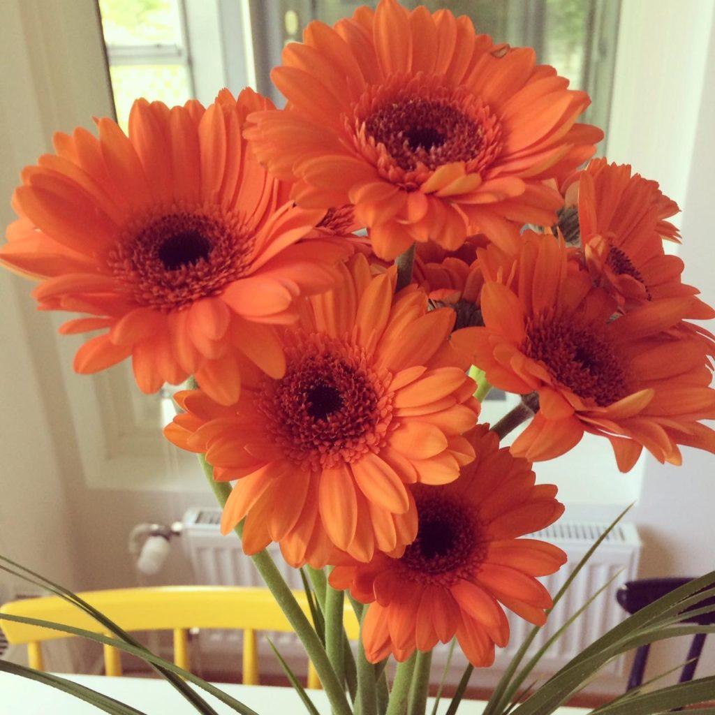 Sain kukkia ja pölynimurin, koska halusin.