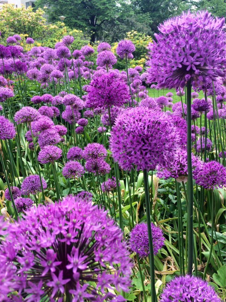 Kauniita kukkia vai harmillisia rehuja?